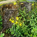 Hollow Stump and Primrose by Deborah Dillehay