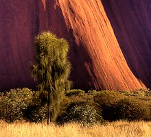 Tree and Rockface - Uluru by Hans Kawitzki