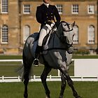 Dressage by Ann Heffron