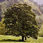 Tree by Cragside House by Uwe Rothuysen