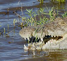 Crocodile by Yves Roumazeilles