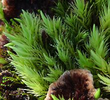 Moss and Thelephora terrestris by KanaShow