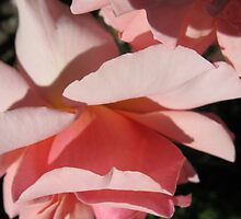 Upside Down Rose by MarianBendeth