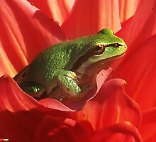 Green Tree Frog And The Dahlia Flower by Jonice