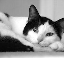 Cat Nap by Megan Martin