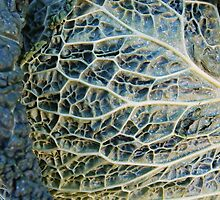 Anatomy of a Cabbage Leaf by Ralph Angelillo
