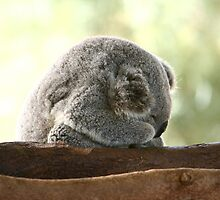 Sleeping koala by yelys