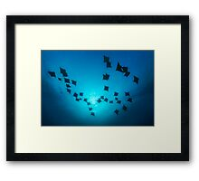 Sun Dancers Framed Print