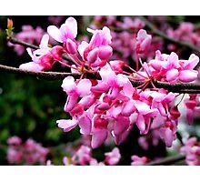 Majestic Blooms Photographic Print