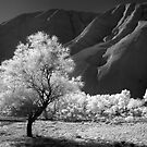 Snow at Uluru - Infrared by Hans Kawitzki