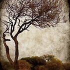 desert tree by Sonia de Macedo-Stewart