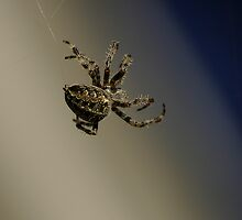 Web Crawler by Al Williscroft