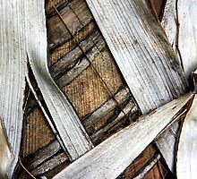 Palm Bark Series 2 by Haydee  Yordan