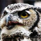 Great Horned Owl by bradvanreenen