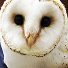 European Barn Owl by bradvanreenen