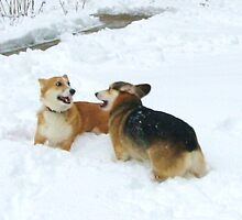 Snow Play by gcampbell
