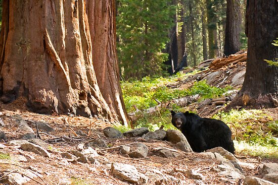 black single women in sequoia national park John muir considered kings canyon as a rival to kings canyon national park should be on every 8 2017 and didn't see a single other person on the.