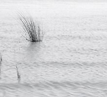reeds by louise