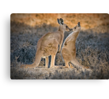 Skippy Kisses Canvas Print
