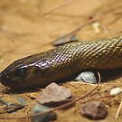 Fierce Snake by bygeorge