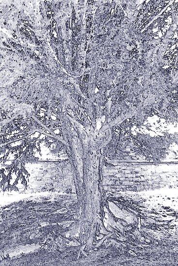 Yew tree by Sandra O'Connor