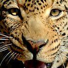 Ferociously close leopard by Richard Shakenovsky