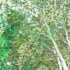 Spring woodland by Sandra O'Connor