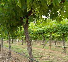 Under the Vines by Skye Hohmann