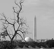 Washington,DC by enterx
