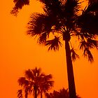 Trees in a Sandstorm, Manly, Sydney, Australia  by Of Land & Ocean - Samantha Goode