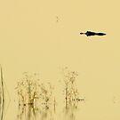 Lurking Luminous Swamp Lagoon Creature.  by Isa Rodriguez