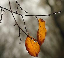 Final leaves of Autumn by David  Altorfer
