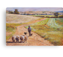Moving the Rams (Whiteheads Creek) Canvas Print