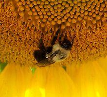 Pollination by Dandelion Dilluvio