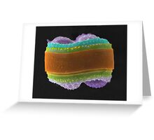 Knitted Colar Greeting Card
