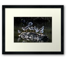 Menagerie on a Tiny Floating Island Framed Print