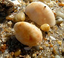 Sea shells in the sand by Lauryn Guyer