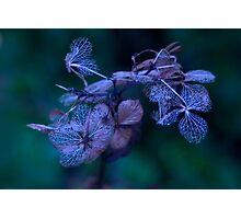 Beauty of Autumn Miniature 2 Photographic Print