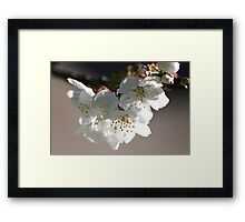 Hanging about Framed Print