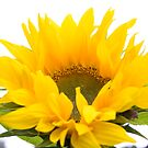 Sunshine sunflower by Sandra O'Connor