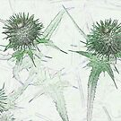 Green thistle by Sandra O'Connor