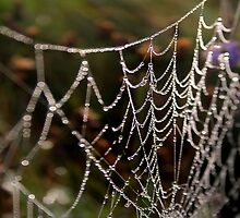 Web by Anthony Thomas