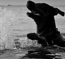 Just swimming by Karel Kuran