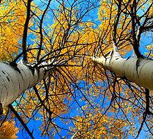 Golden Canopy by Mitchell Tillison