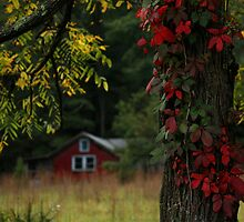 THE OLD CAMP by Lori Deiter