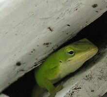 """Anole, """"This is My Spot"""" by JeffeeArt4u"""