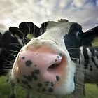 Nosey Cow by Andy Surridge