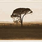 tree by jfpictures