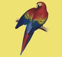Illustration of A Scarlet Macaw Isolated On White Kids Clothes