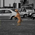Jumping dog by Alomie